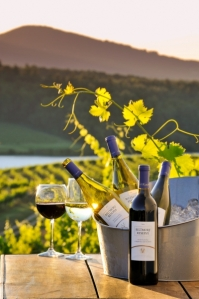 biltmore-wine-vineyard